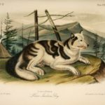 Hare Indian Dog painting