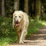 old age symptoms in dogs