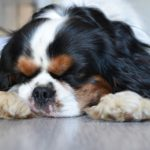 why do dogs have nightmares?