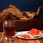 Did your dog eat too much watermelon?